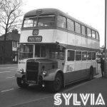 Sylvia EP